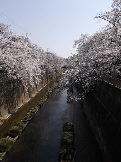 桜0497