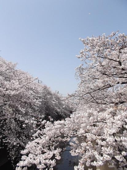 桜0506
