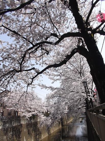 桜0567