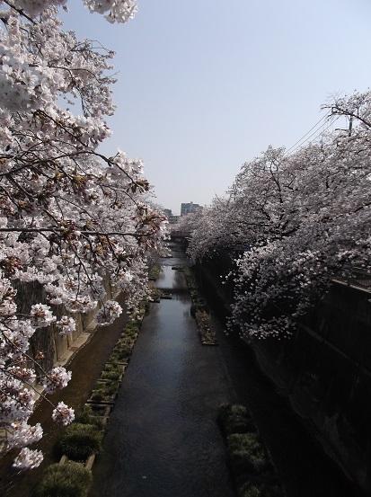 桜0501