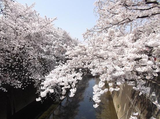 桜0507
