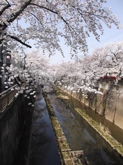 桜0493