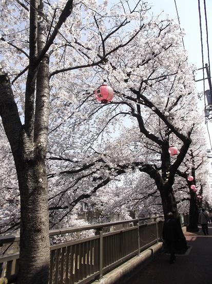 桜0568