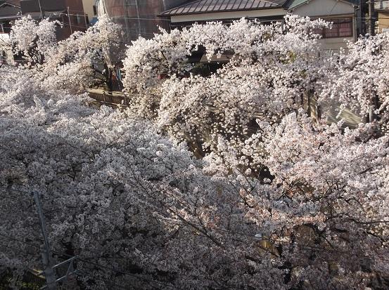 桜0647