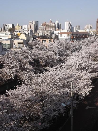 桜0649