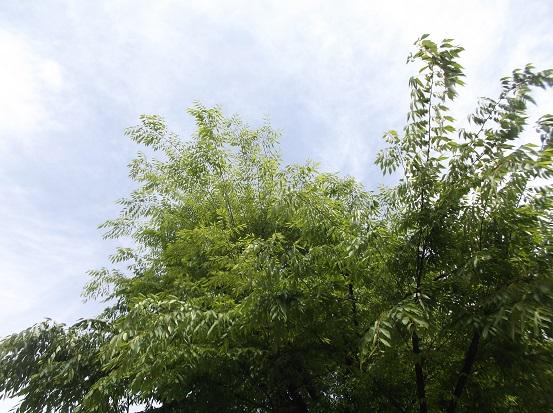 樹0826