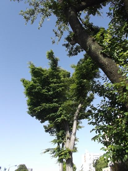 樹1011