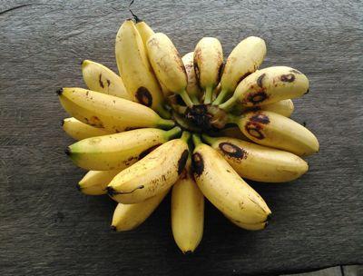 ベビィバナナ