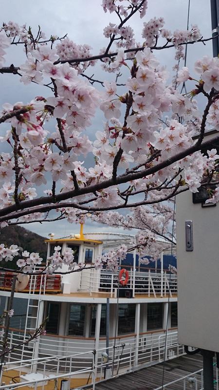 観光船 桜
