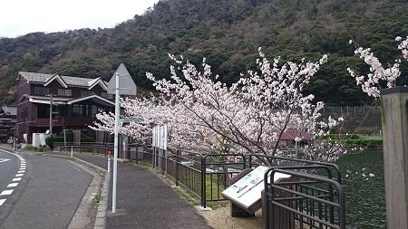 パムコ 桜