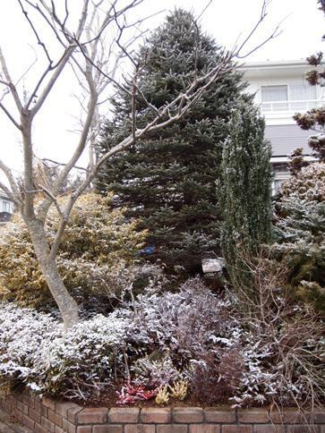 my-garden 058 (2)