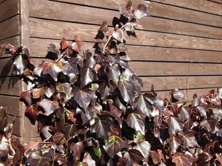 my-garden 087
