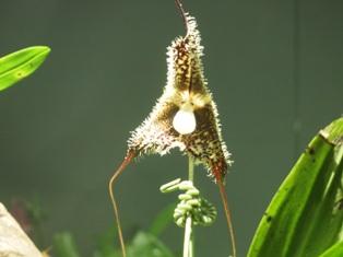 my-garden 289