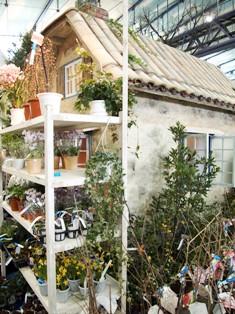my-garden 145