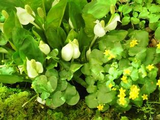 my-garden 216