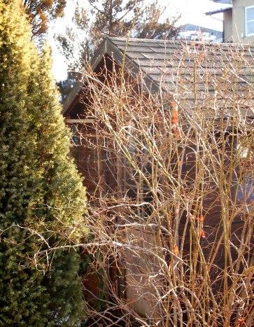 my-garden 023