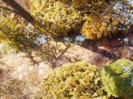 my-garden 075 (2)