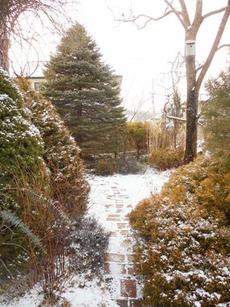 my-garden 045 (3)