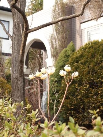 my-garden 055 (2)