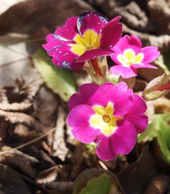 my-garden 077 (2)