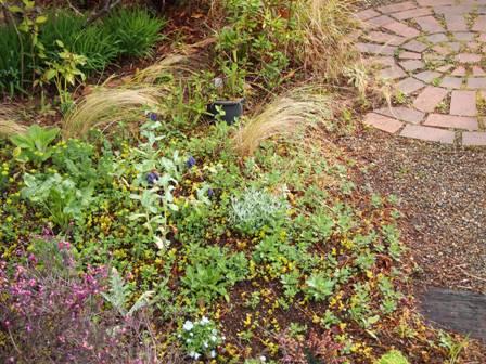 my-garden 039