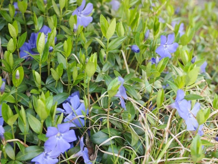 my-garden 030 (3)