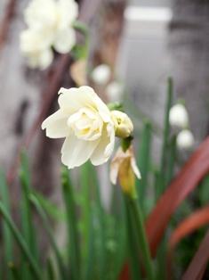 my-garden 030 (5)