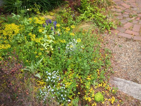 my-garden 069