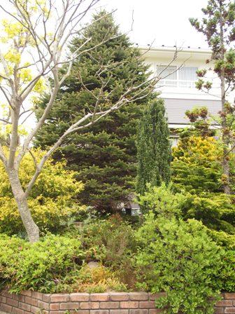my-garden 085