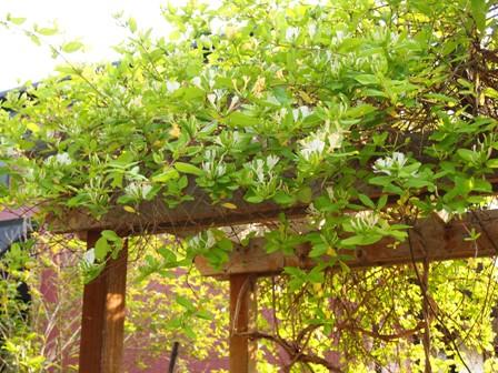my-garden 021 (4)