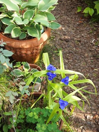 my-garden 015 (3)