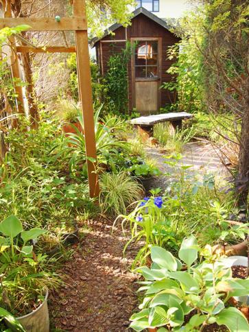 my-garden 013 (5)
