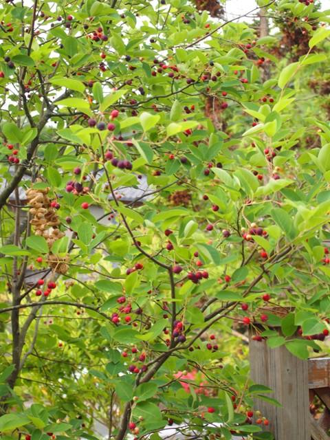 my-garden 004 (3)
