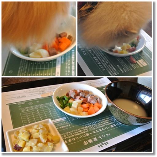 cats4_201501021854145e4.jpg