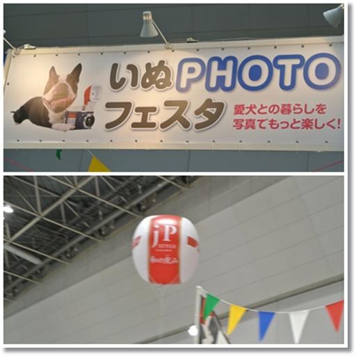 cats_2015040418194903d.jpg