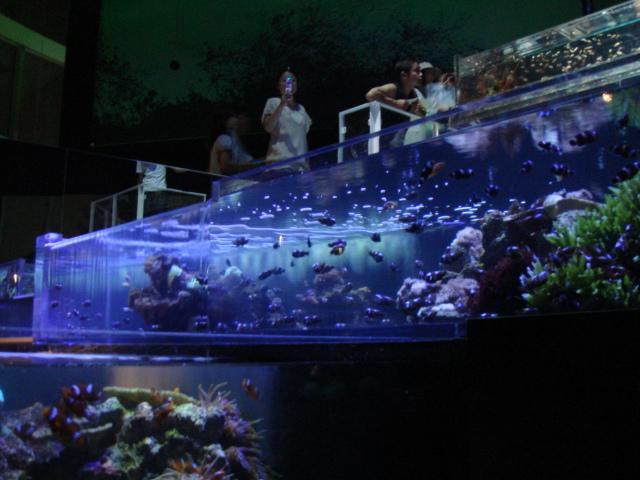 tokyo Aquario 032