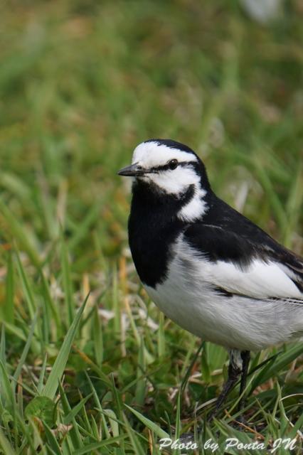 Bird1505-0002.jpg