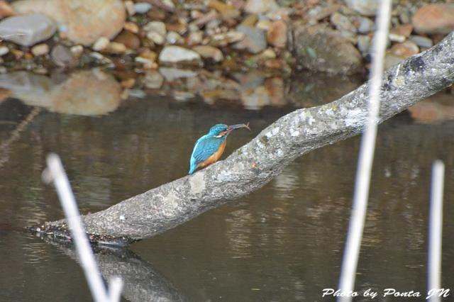 Bird1505-0009.jpg