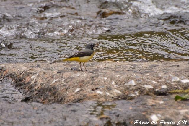 Bird1505-0011.jpg
