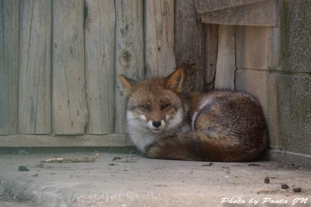 animal1504-0008.jpg