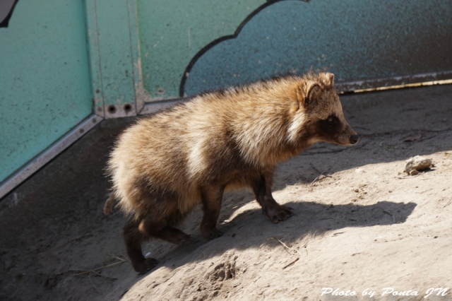 animal1504-0010.jpg