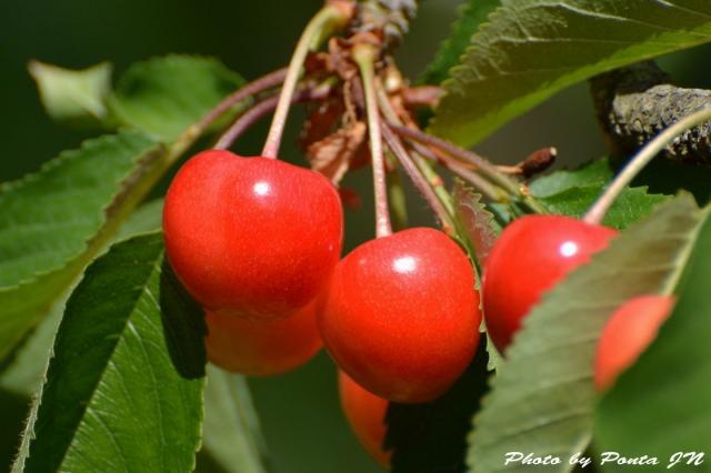 cherry150607-0002.jpg