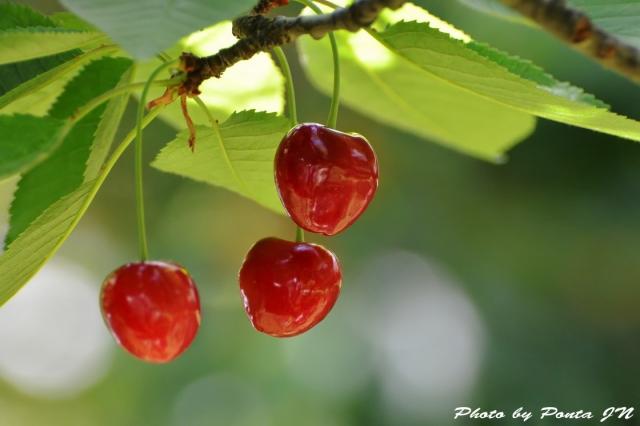 cherry150607-0004.jpg