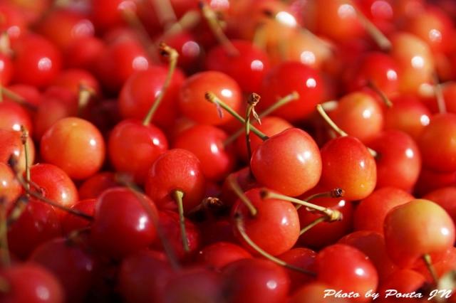 cherry150607-0007a.jpg