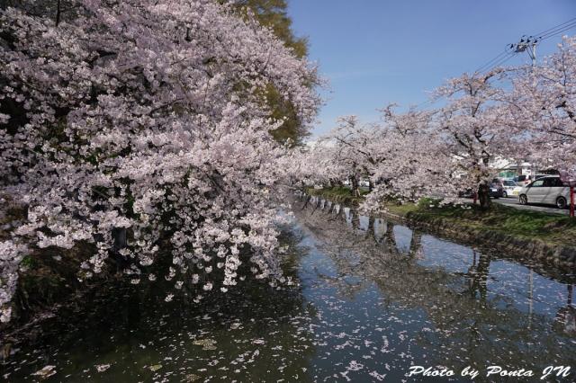 hirosaki1504-0005.jpg