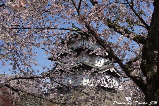 hirosaki1504-0011.jpg