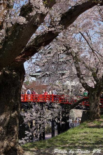hirosaki1504-0012.jpg