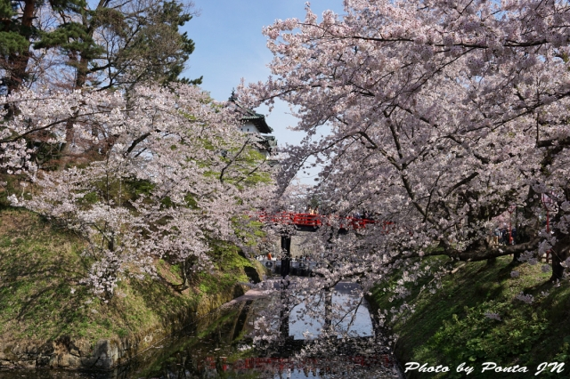 hirosaki1504-0013.jpg
