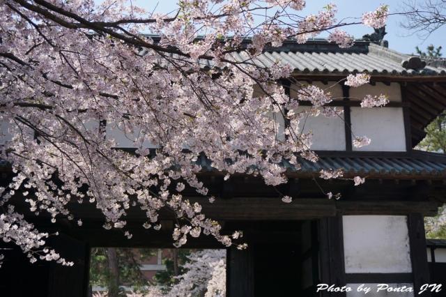 hirosaki1504-0018.jpg