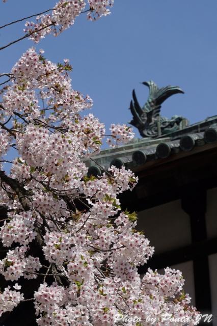 hirosaki1504-0019a.jpg